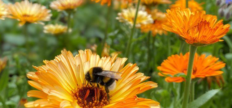 Blühflächen-Aktion 2020 – Schickt eure Bilder